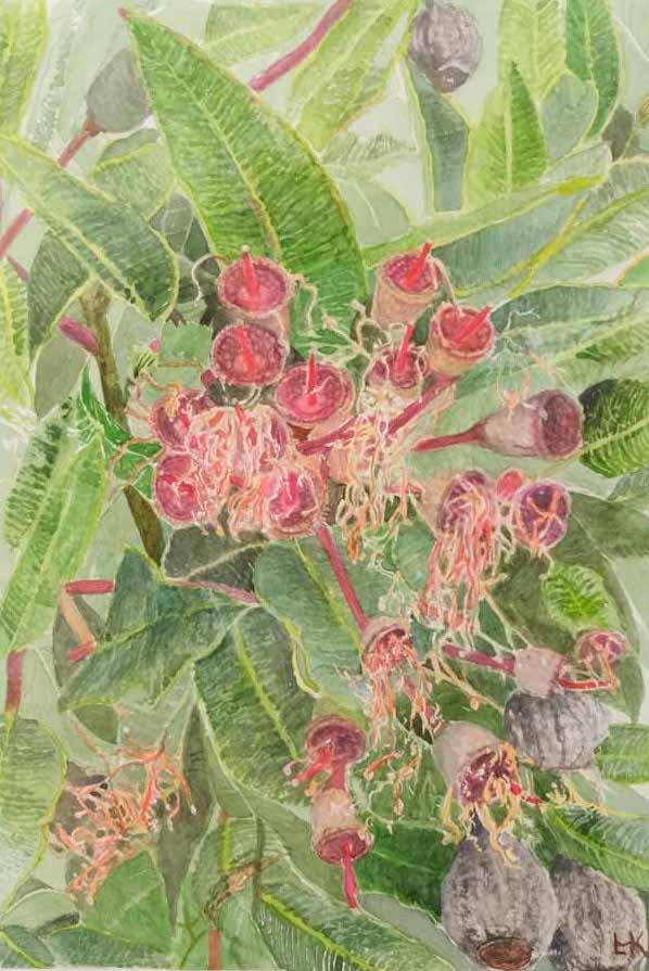 Lynn Kharanda - Gum Nuts