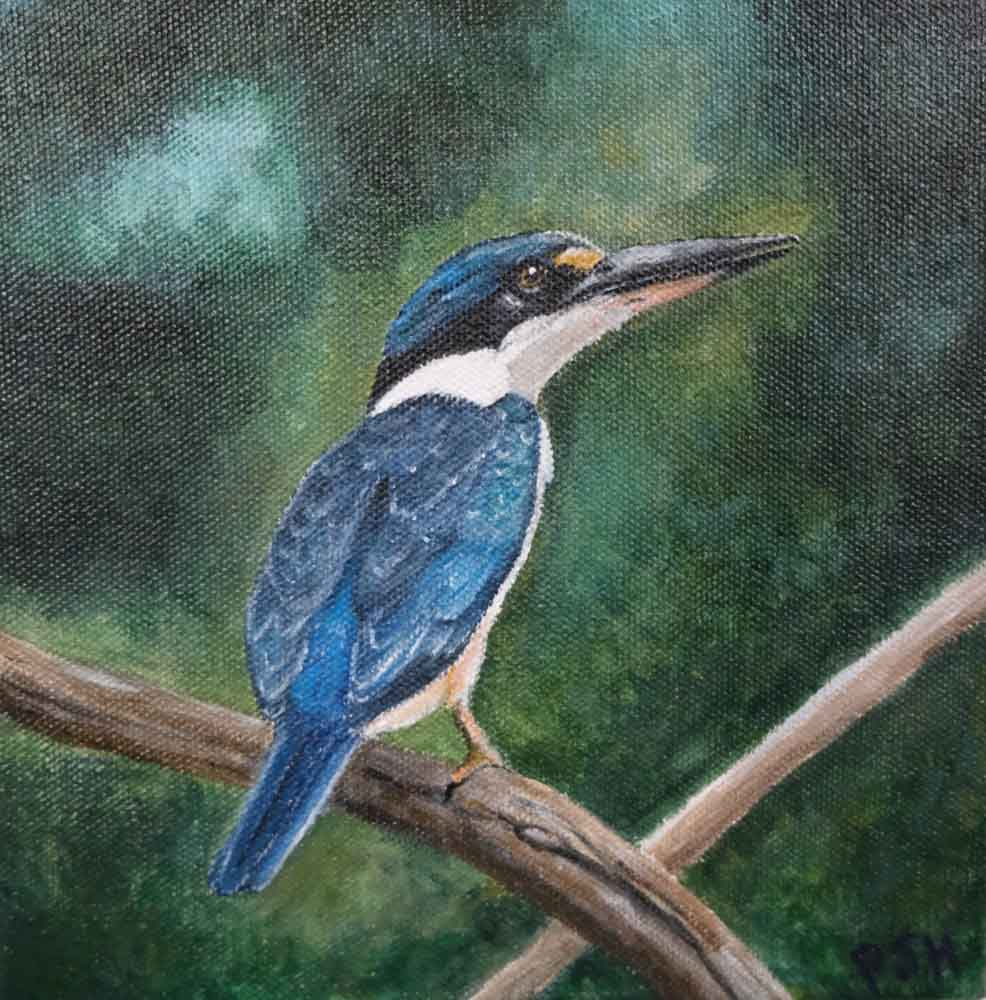 Patricia Hunt - Sacred Kingfisher