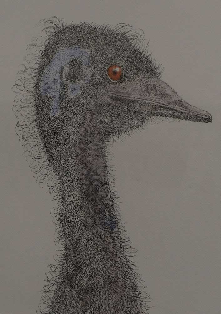 Geoff May - Old Man Emu